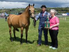 champion-pony-clonakilty