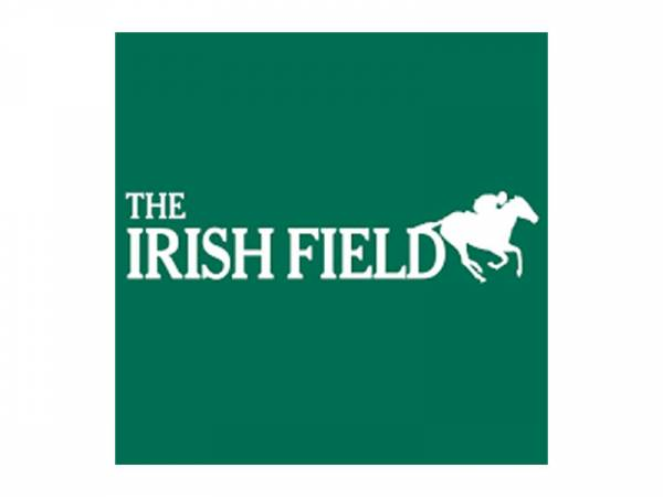 the-irish-field