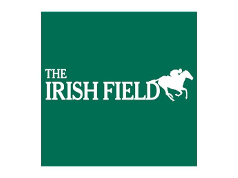 the-irish-field